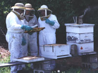 Picture image of men working with a bee hive